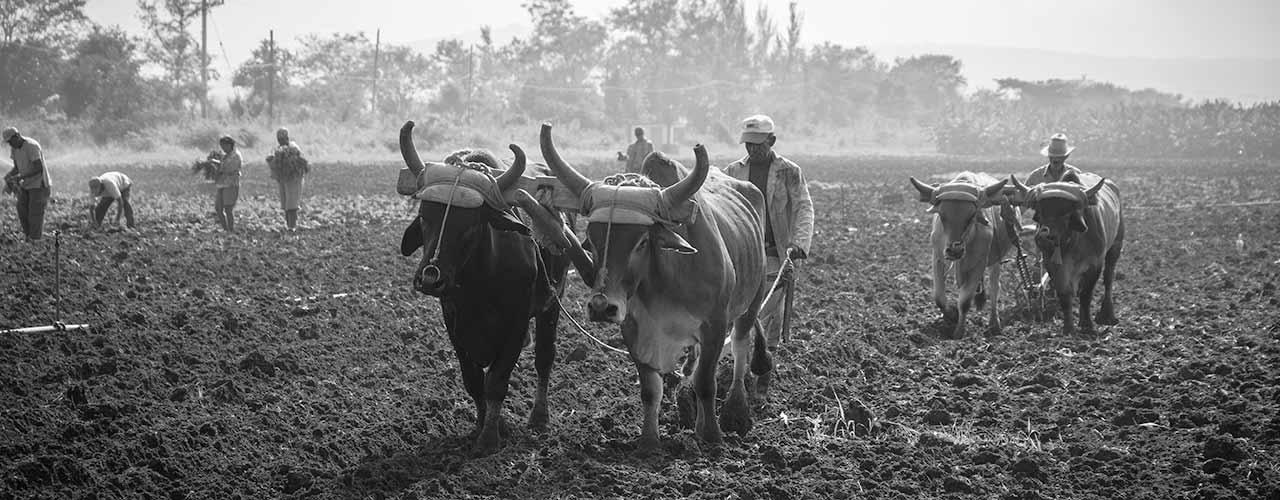Hårdt manuelt arbejde på Cuba. Foto: Theodor-Hensolt (CC by 2.0)