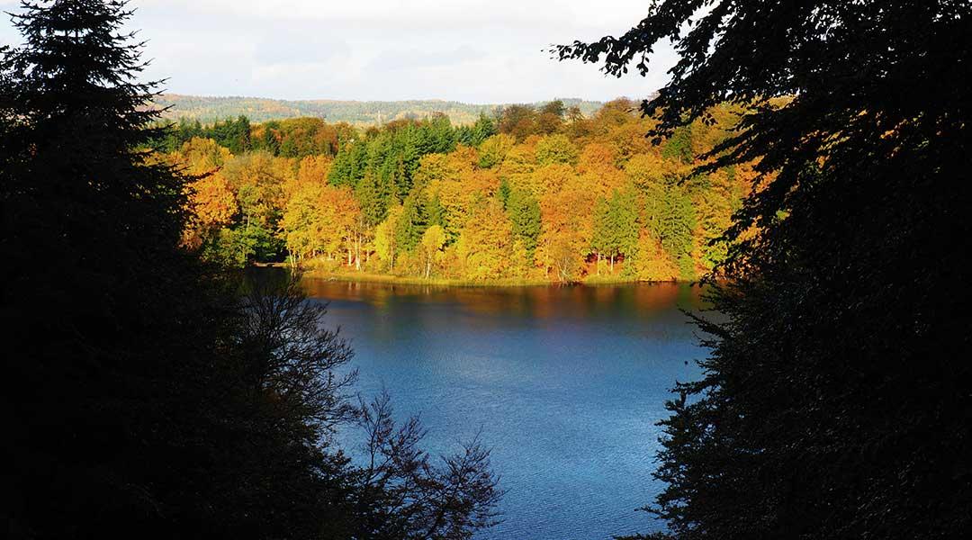 Søhøjlandet udsigt over skov i efterårsdragt